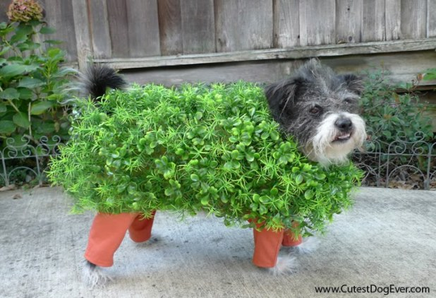 chia_pet_halloween_dog_costume_cutest_dog_ever[1]